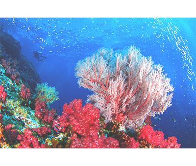海のおおらかさパワー・強い生命力